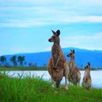 オーストラリアのレンタカー事情、日本の交通ルールとの違いは?